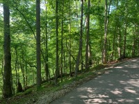 REAL ESTATE: SELLING ABSOLUTE! Vacant Lot in Four Seasons Resort - Lot #533 - April Drive, Smithville, TN - 5